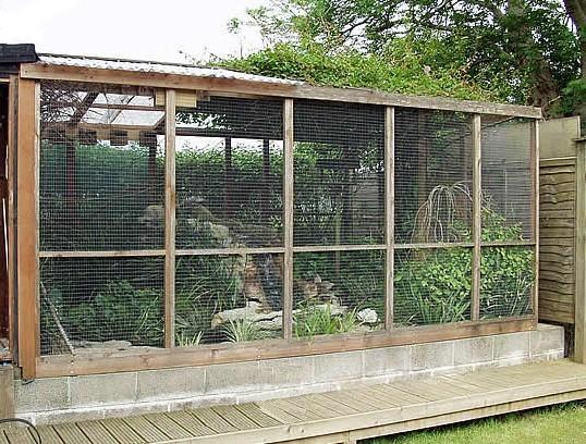 Pin piante da interno on pinterest for Alberelli da esterno